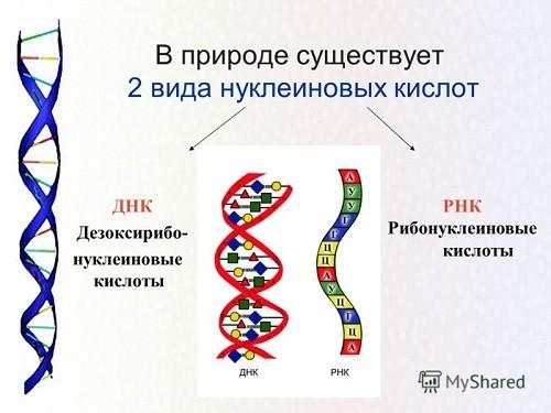 нуклеозиды