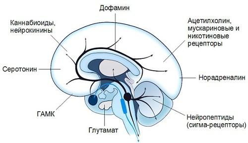 частые нейромедиаторы