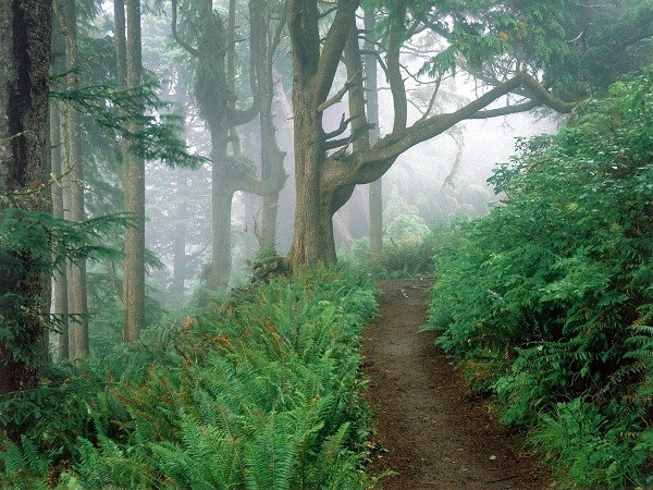 тропа в лесу