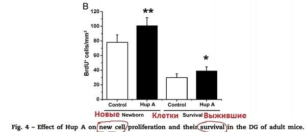 гиперзин новые и выжившие клетки