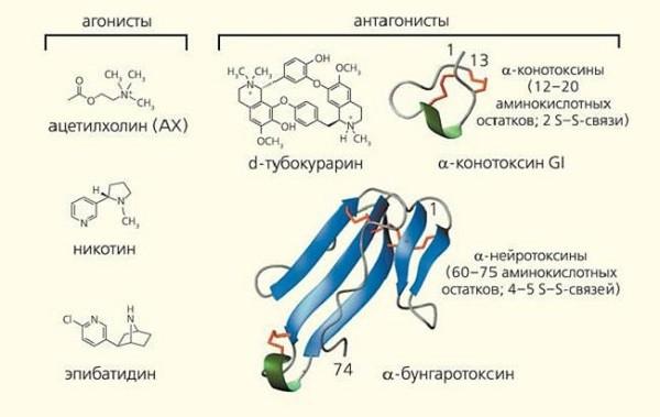 антагонисты ацетилхолина