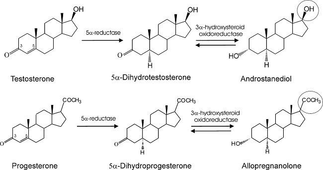 метаболиты тестостерона и прогестерона