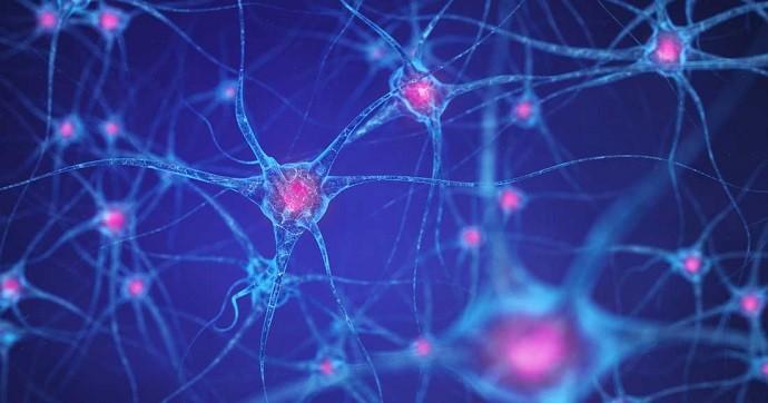 нейроны мозг синапсы