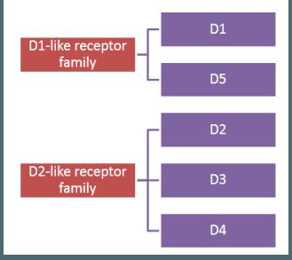 дофаминовые рецепторы