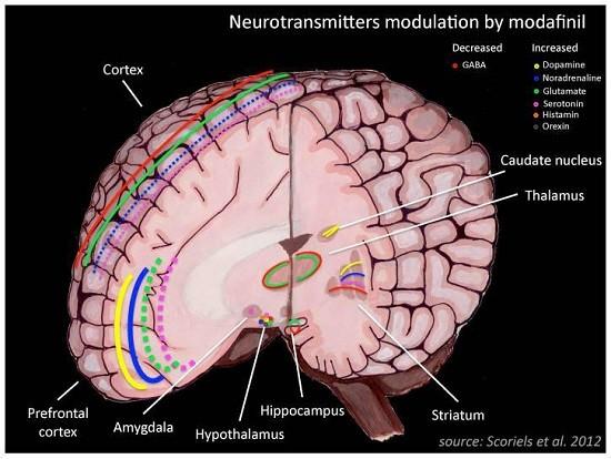 как работает модафинил