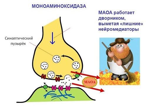МАО ингибиторы наглядно