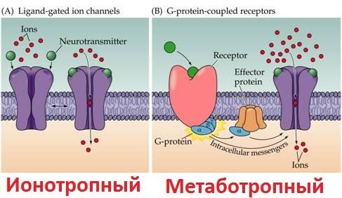 рецепторы гамк