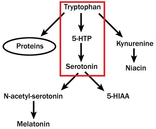 синтез серотонина