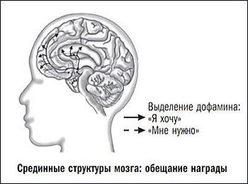 выделение дофамина