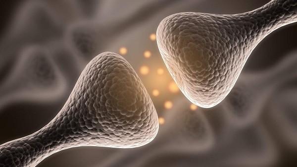 синапс дофамин