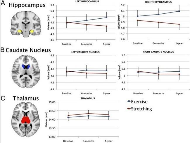 Гиппокамп и нейрогенез