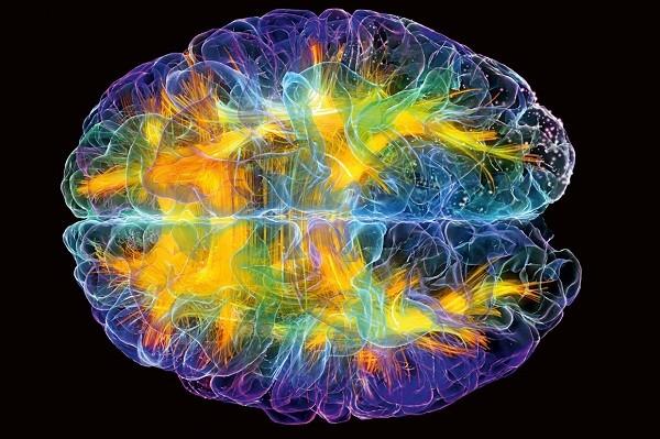 мозг интеллект развить