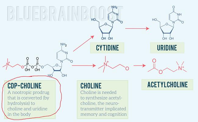 цитихолин ацетилхолин