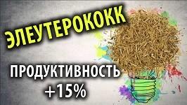 Элеутерококк продуктивность +15%