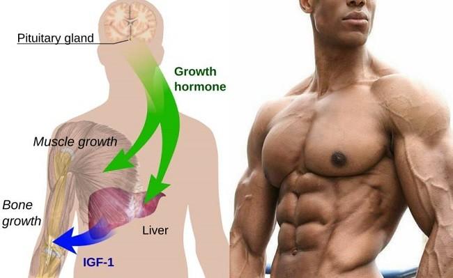 гормон роста igf
