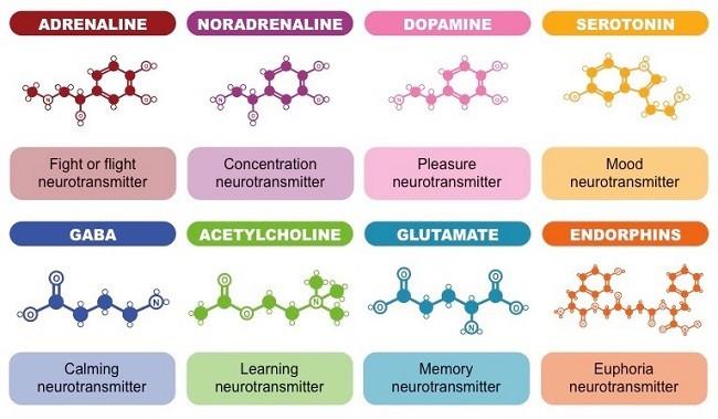 эффекты нейромедиаторов