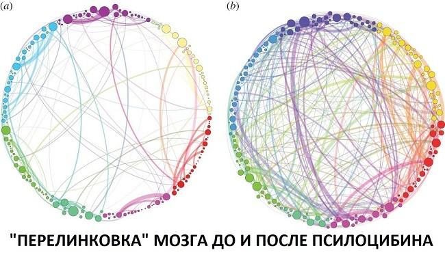 что грибы делают с мозгом