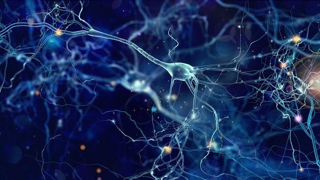 чувствительность рецепторов к дофамину