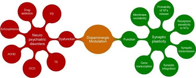 колебания дофамина