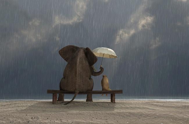 медитация loving-kindness
