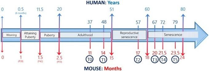 Корреляция жизни мышей и людей