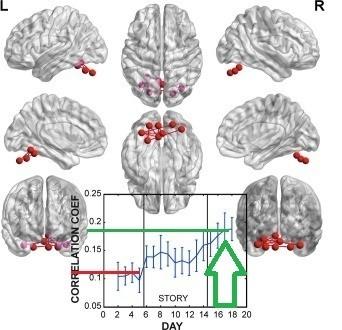 чтение и мозг