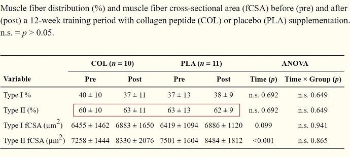 коллаген мышечные волокна